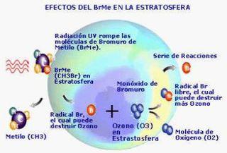 Fuente de bromo y la destrucción del ozono