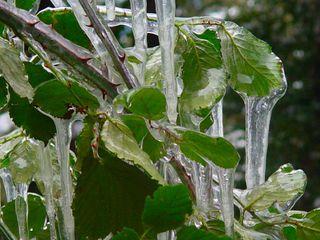 Fuente y hojas heladas