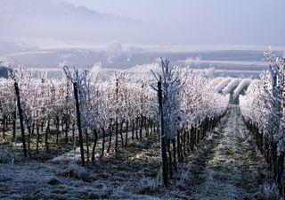 Gelate tardive, gravi danni all'agricoltura in Francia e Italia