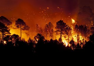 Global CO2 emissions from wildfires at record high
