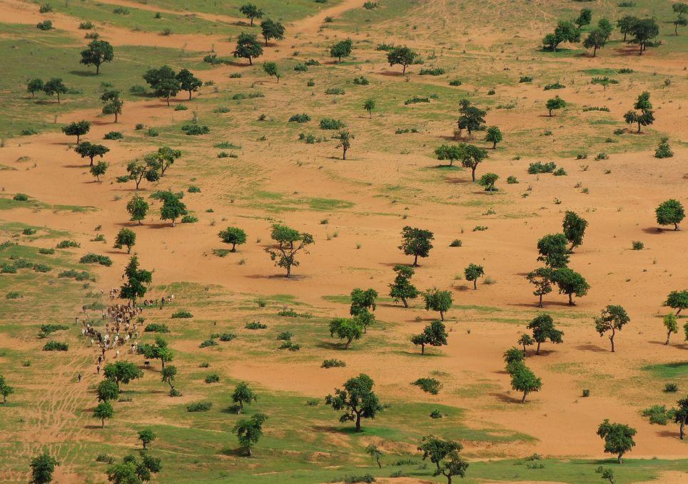 La Grande Muraglia Verde: curiosità sulla barriera di alberi in Africa