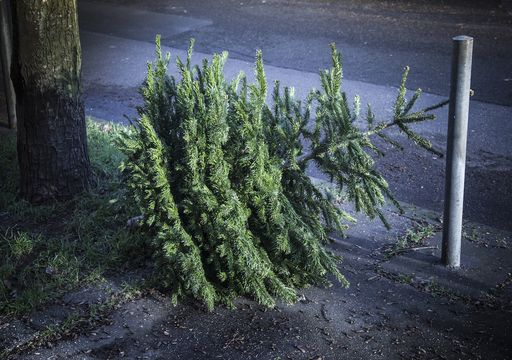 Greener ways to dispose of our Christmas trees