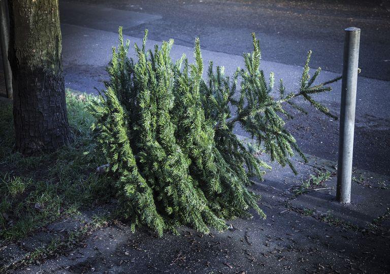 Christmas tree on pavement.