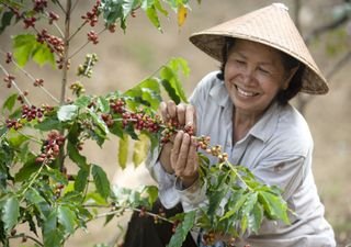 Guter Kaffee ist in Gefahr: Schuld ist der Klimawandel!