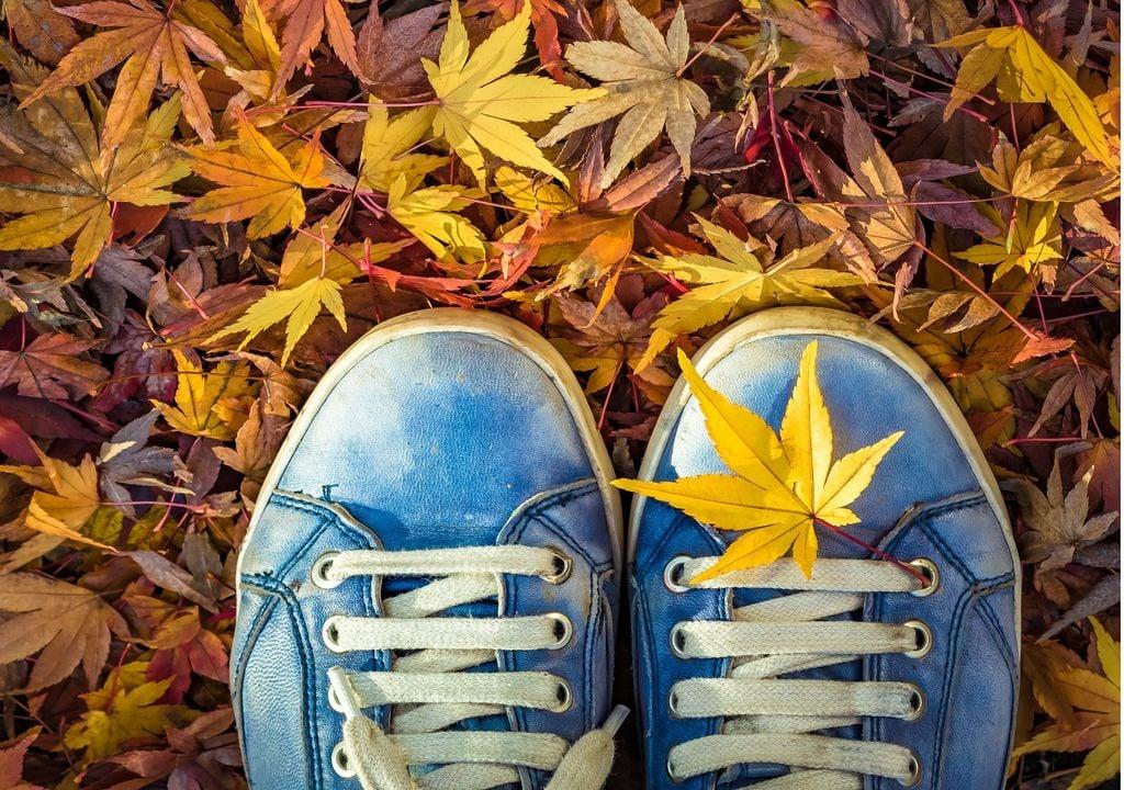 Es característico del otoño la caída de hojas de los árboles, recuerda que estas sirven como fertilizadoras naturales para la tierra.