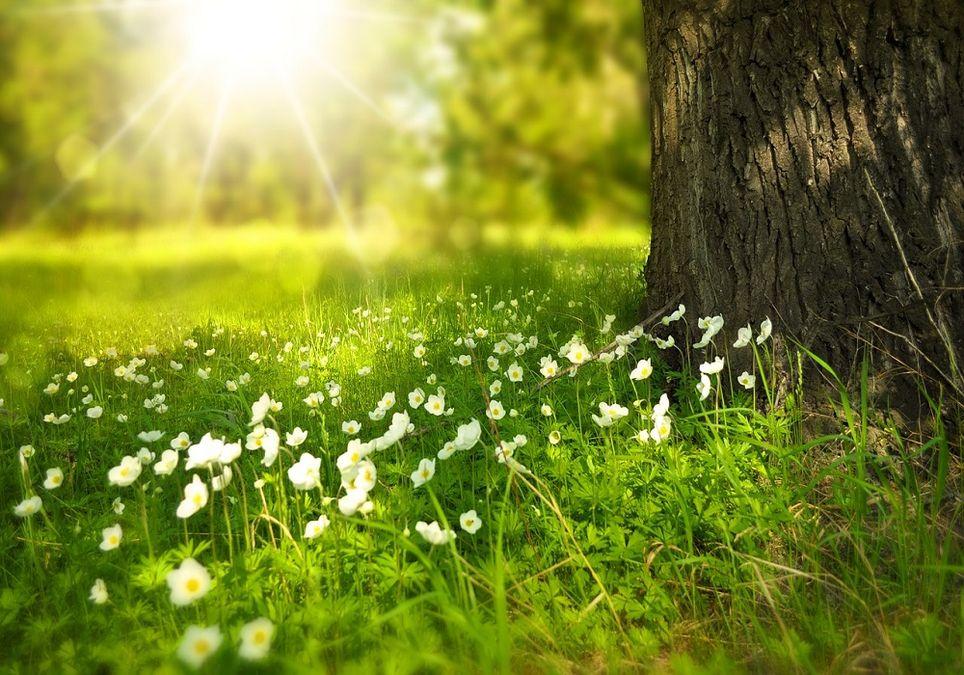 Hasta el 20 de marzo no comenzará la primavera astronómica, la climática arrancará el 1 de marzo.