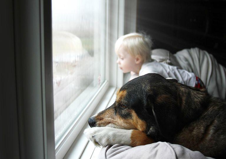 Niño y su perro mirando la lluvia por la ventana