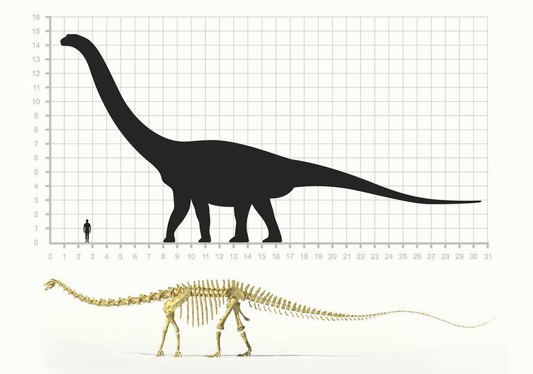saurópodos gigantes