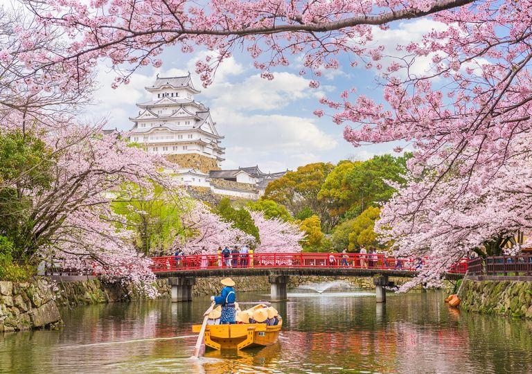 Castillo Himeji; cerezos florecidos; Japón