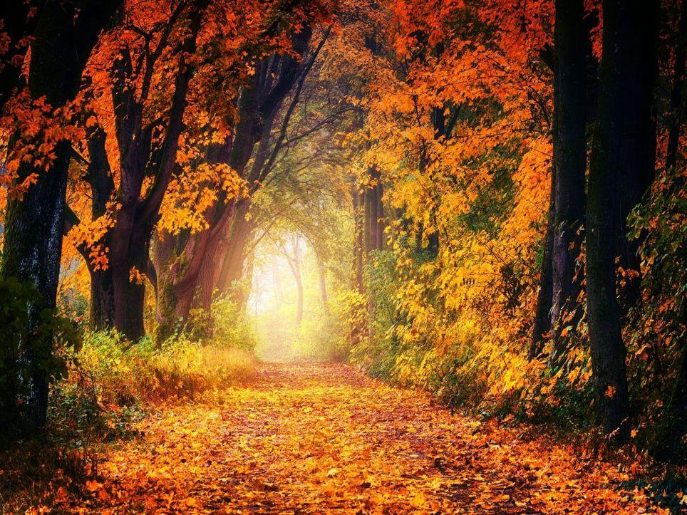 Herbst-Vorhersage