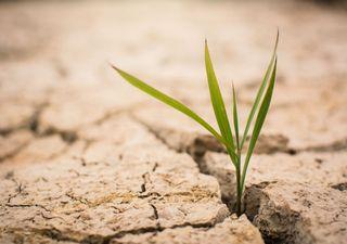 Heißzeit verstärkt die Dürre- bis 35 Grad warm!