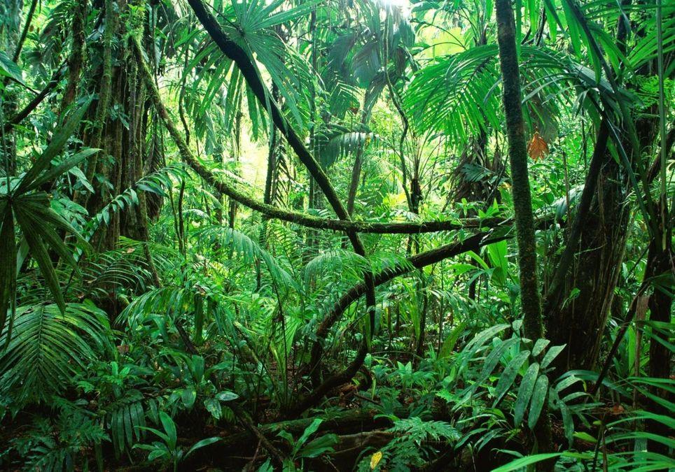 Hitzewelle in Australiens Dschungel