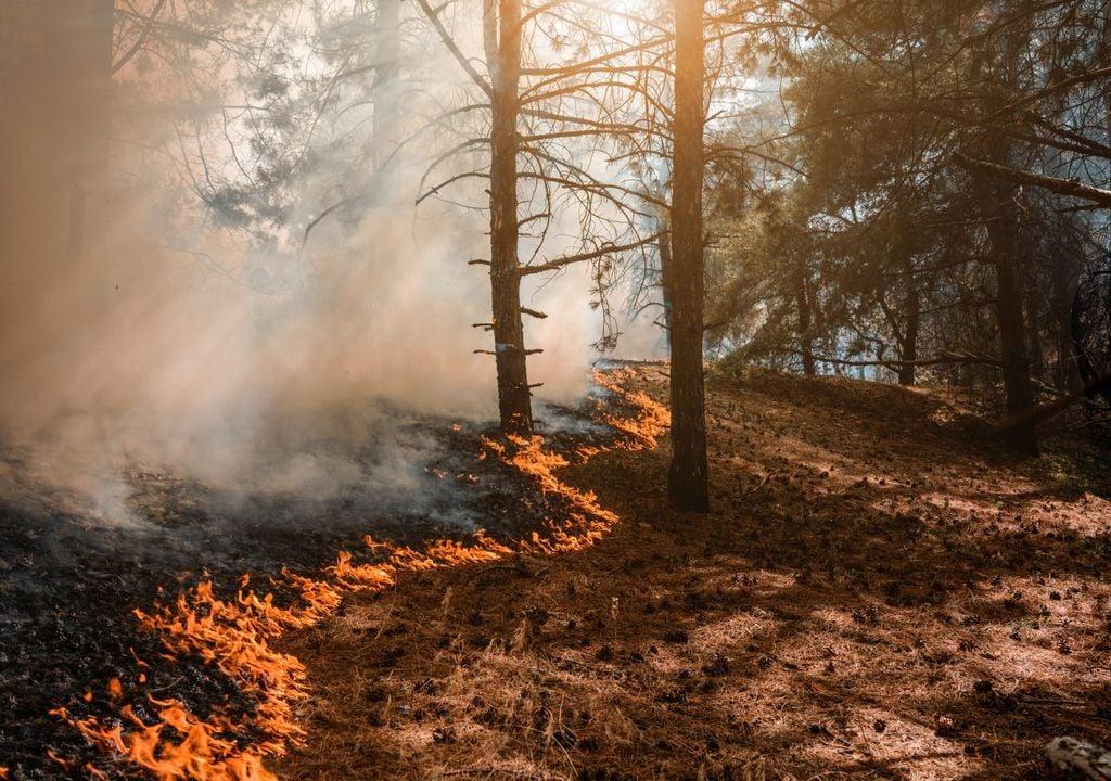 Hitze und Waldbrände
