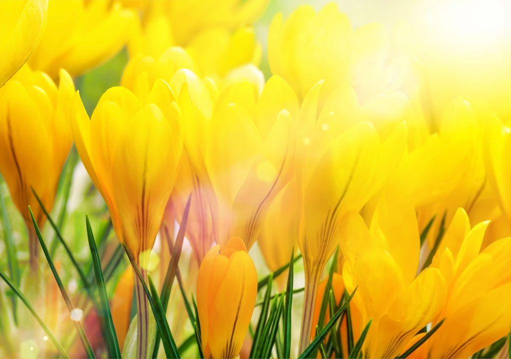 Sonnen-Frühling