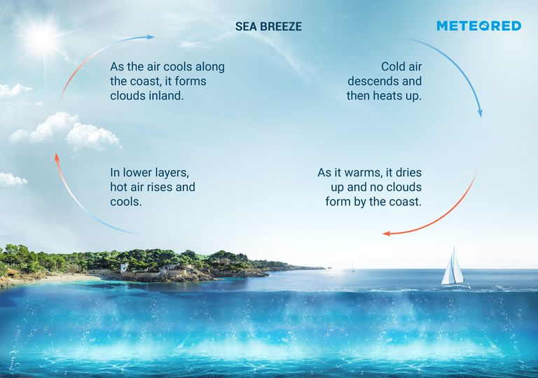 Infographic explaining the formation of sea breezes.