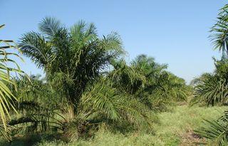 Biocarburant : discrète réintroduction d'une exonération fiscale