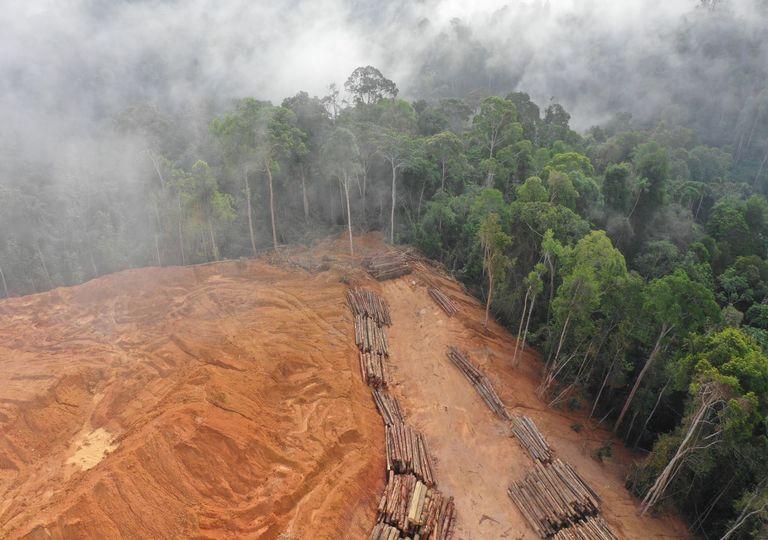 Aerial view of deforestation for logging (c)Richard Carey