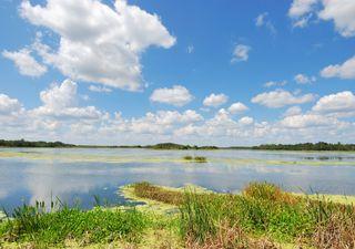 Humedales construidos: ecotecnología para aguas más limpias