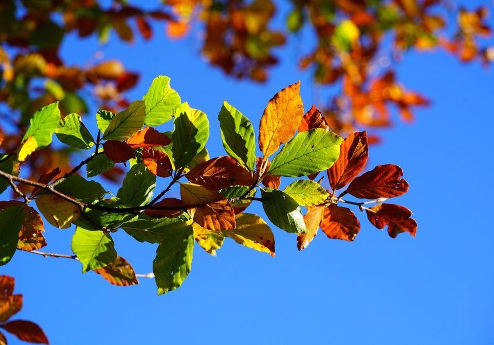 Weiterhin goldener Oktober?