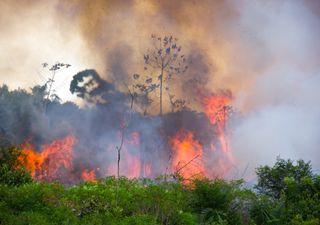 Incendios en la Amazonía: la estación seca podría empeorarlos