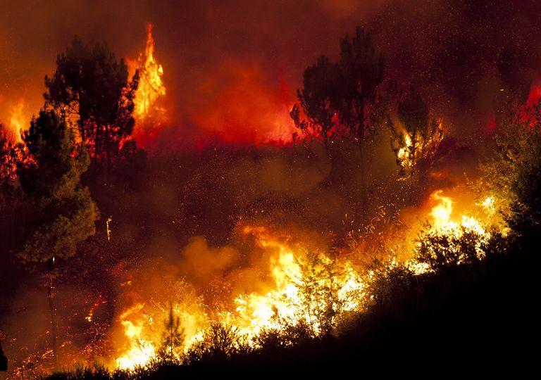Incendios forestales en el norte argentino