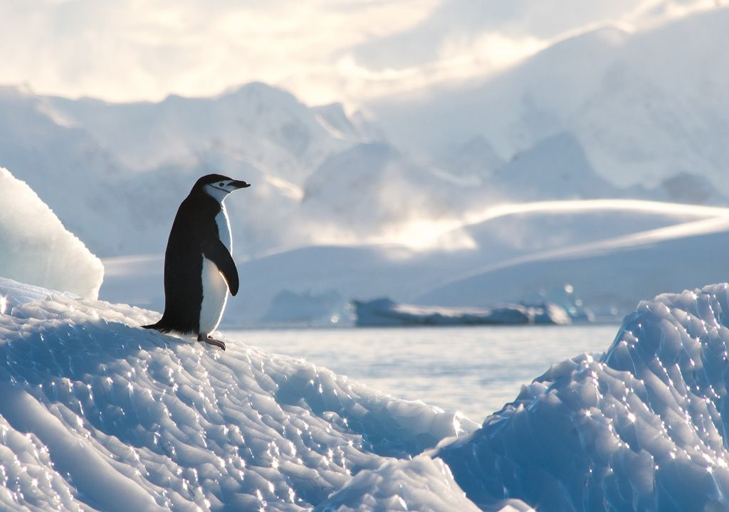 Pingüino en Antártica