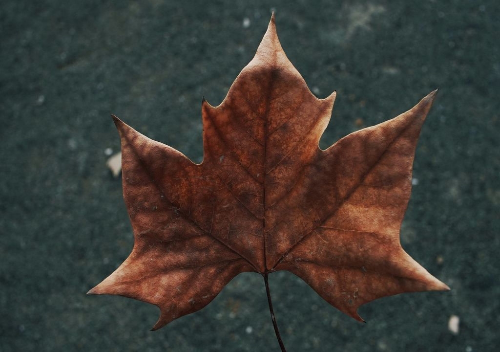 Es común durante el otoño que los paisajes se pinten de café y amarillo ante la caída de hojas.