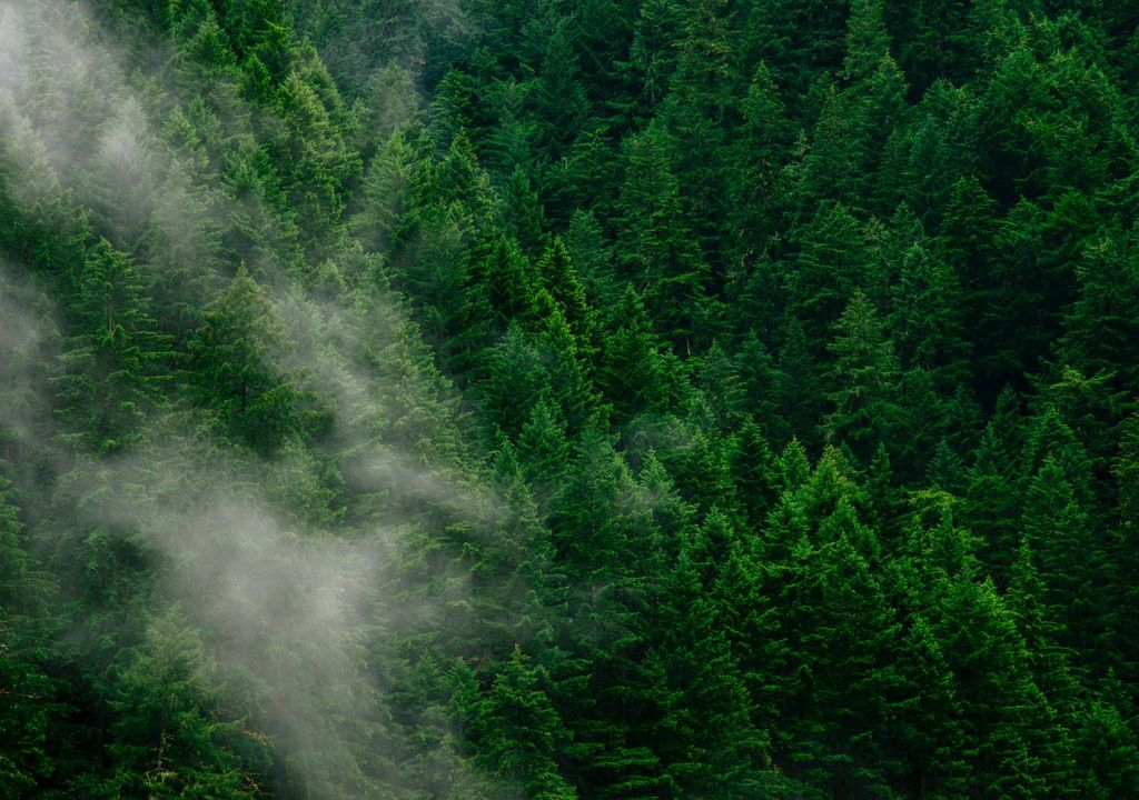 Insulating Effect of Forests Revealed