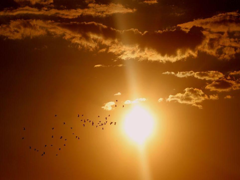 Diese Woche schwitzt ganz Deutschland: Hitzewelle mit Dauer-40-Grad droht