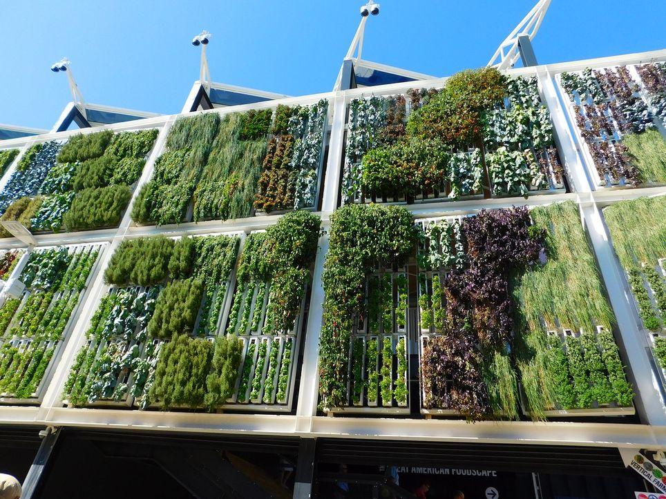 Los jardines verticales son planteados como una excelente medida de adaptación al cambio climático.