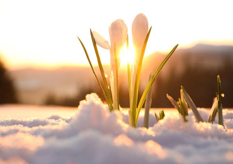 Flores con nieve