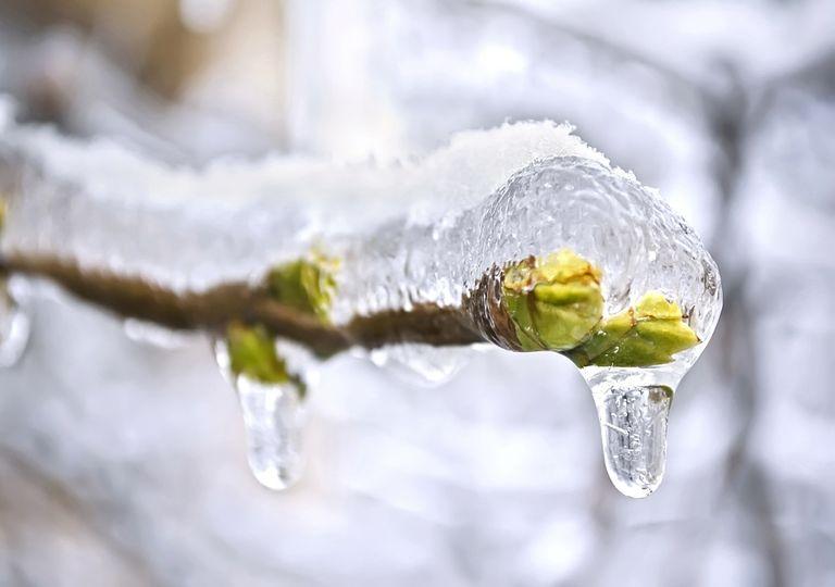 Eis-Frühling