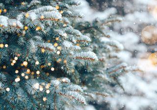 Temperatursturz an Weihnachten: Nach Rekordwärme kälter!