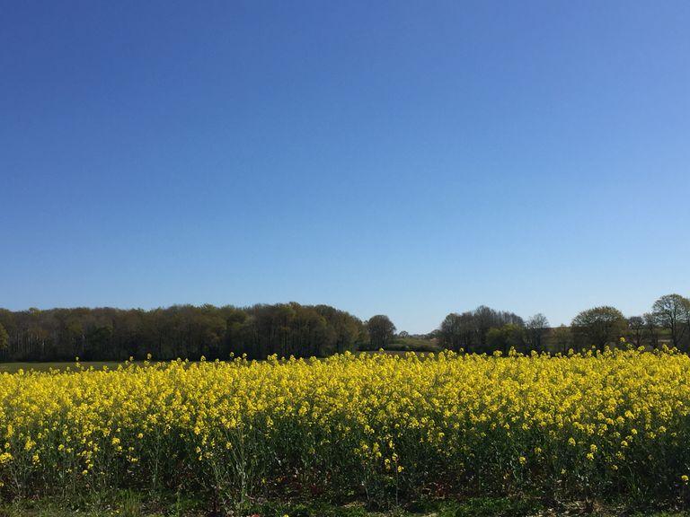 Météo estivale généralisée en fin de semaine avec un ciel souvent bleu et des températures s'envolant littéralement...