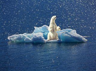 Clima, l'Italia non ospiterà la conferenza COP26