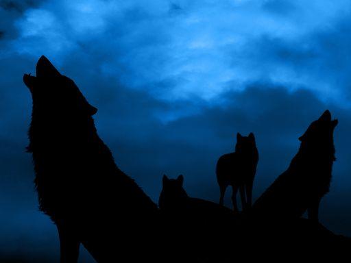 La hora del lobo: el cielo azul que enamora a los fotógrafos