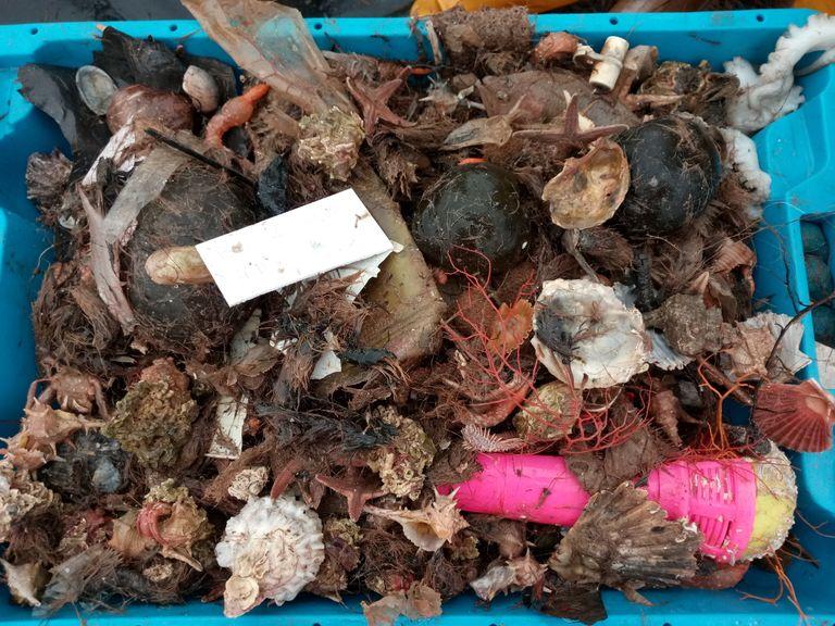 Una de las cajas repletas de basura recogidas durante el estudio./ EVE GALIMANY/ ICM-CSIC