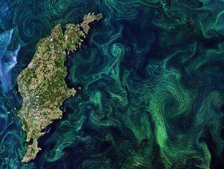 La bomba viva de carbono de los océanos