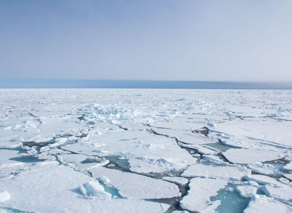 Banquisa polar