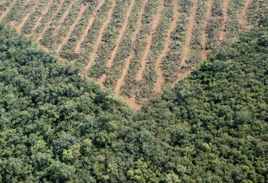 ¿La principal problemática de este tipo de cultivos? Los intereses políticos, económicos y empresariales que hay detrás. Fuente: Greenpeace.
