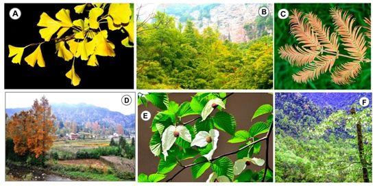 La Estabilidad Climática Continuada Permitió La Supervivencia De 450 'fósiles Vivientes' De Plantas En China