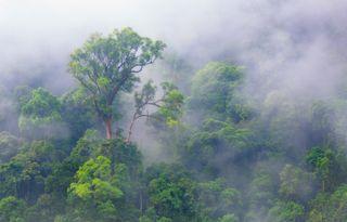 La interrelación bosques-lluvia