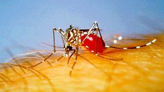 La malaria y el tiempo bajo el mismo paraguas
