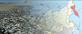 La muerte de la vida marina en Kamchatka fue causada por algas tóxicas