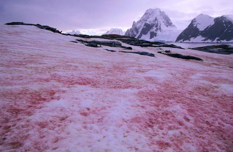 Resultado de imagen de nieve rosa