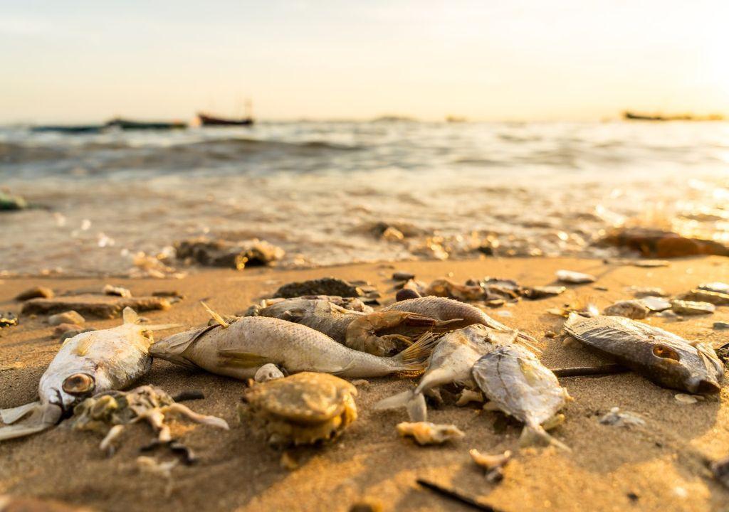 oceanos, ola de calor, cambio climático