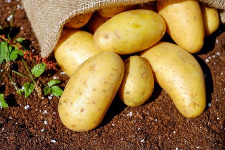 Hasta ahora, el origen de la patata se había documentado únicamente utilizando aproximaciones históricas./ PIXABAY