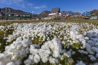 La primavera llega antes en las regiones polares que en el resto de la Tierra