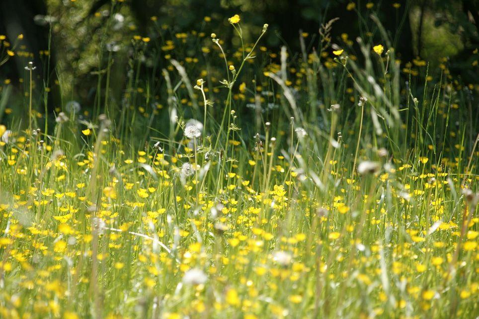 Campo en primavera