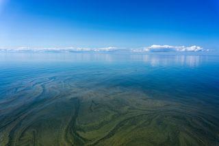 Pulmones submarinos de nuestro planeta